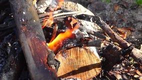 Camp fire in autumn forest tilt stock video