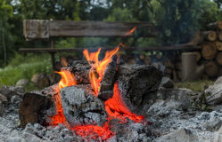 Camp fire. Burning camp fire in dusk in forest Stock Image