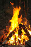 Camp fire burning Royalty Free Stock Photo