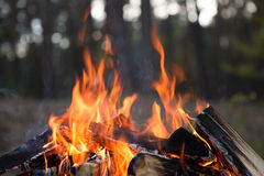 Camp fire burns Stock Image