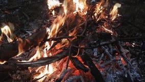 Camp fire close up. Camp fire flame close up stock video