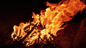 Camp fire flames. Camp fire burning in the night, wild camping in the woods stock video