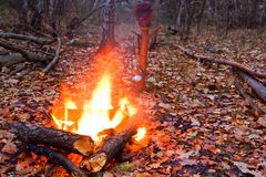 Camp-fire in a  forest Royalty Free Stock Photos