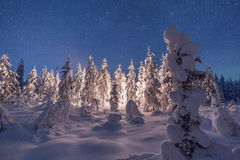 Camp fire in forest in Lapland Stock Images