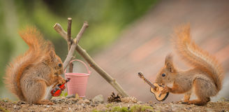 Camp fire music. Young  red squirrels  at a  fire place with music instruments Royalty Free Stock Photos