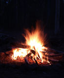 Camp fire in the night Stock Photo