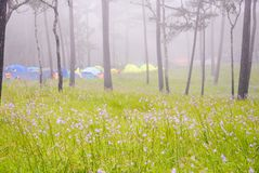 Camp. Of forest Stock Image