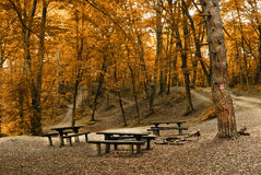 Camp in the forest. Camp in the autumn forest Royalty Free Stock Photos