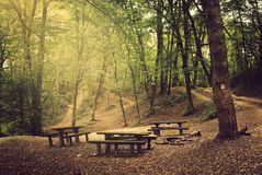 Camp in the forest Royalty Free Stock Photo