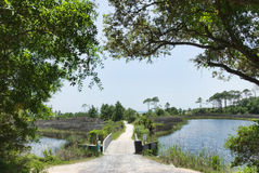 Camp Helen State Park Walkway To The Gulf Of Mexico Royalty Free Stock Photo