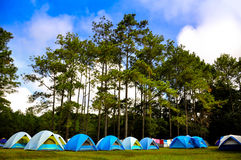 Camp in the mountain. Near pine forest Royalty Free Stock Photos