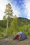 Camp at mountains. Camp in piny forest in mountains at summer Stock Image