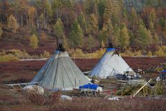 The camp of Nenets reindeer herders. royalty free stock photos