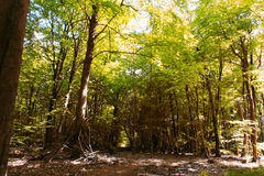 Camp out of branches in the woods Royalty Free Stock Images