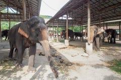 Camp thaï d'éléphant Images libres de droits