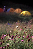 Camp in wild flowers Stock Photos