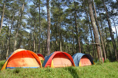 Camp in the woods Royalty Free Stock Photos