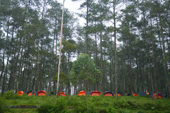 Camp in the woods Stock Image