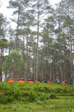 Camp in the woods Royalty Free Stock Images