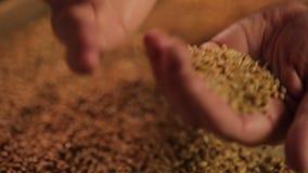 Campaña promocional para la compañía agrícola, manos humanas que vierten el grano del trigo almacen de video