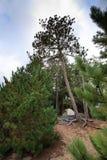 campa campingplatstentträn Royaltyfria Bilder