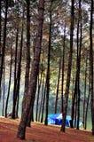 Campa i pinjeskog och reservior Arkivfoto