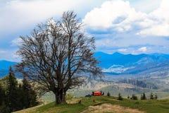Campa i rött tält under ett träd överst av ett berg härligt Royaltyfri Bild