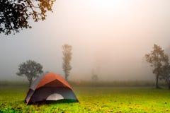 Campa i skog med tältet på den Thung Salaeng Luang nationalparken, Phitsanulok landskap Thailnad arkivfoton