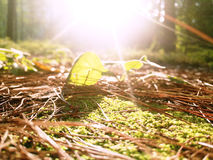Campa i urtids- skog Royaltyfri Fotografi