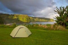 Göra grön tenten som kastas i den frodiga Maui kustlinjen Arkivbilder