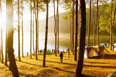Campa på Pang Tong Under Royal Forest Park Arkivfoton