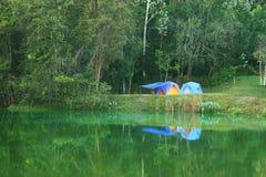 Campa på tropisk skog för dammbank royaltyfri bild