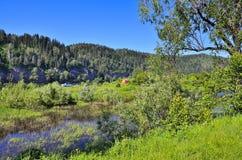 Campa plats på banken av floden Arkivfoto