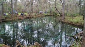 Campa prov i den härliga skogen i Ginnie Springs, Florida royaltyfri foto