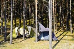 campa skog Royaltyfria Bilder