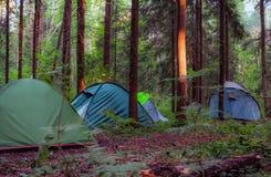 campa skog Fotografering för Bildbyråer