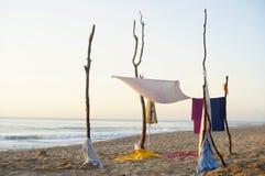 campa som är wild Fotografering för Bildbyråer