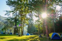 Campa tält i gräsmattan med solljusmorgon av skogen Royaltyfria Foton