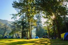 Campa tält i gräsmattan med solljusmorgon av skogen Royaltyfria Bilder