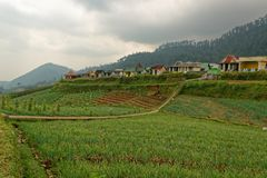 Campagna agricola in Java centrale Fotografia Stock