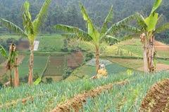 Campagna agricola in Java centrale Fotografia Stock Libera da Diritti