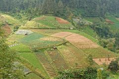 Campagna agricola in Java centrale Fotografie Stock