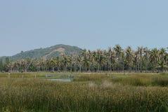 Campagna asiatica della piantagione degli alberi del cocco Fotografie Stock Libere da Diritti