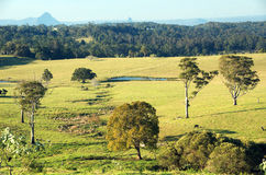 Campagna australiana Fotografia Stock