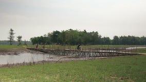 Campagna, bambù, Cambogia video d archivio