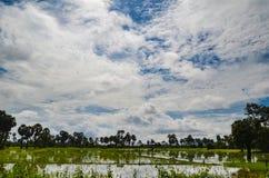 Campagna cambogiana, Siem Reap, Cambogia Fotografia Stock Libera da Diritti