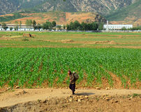 Campagna, Corea del Nord Immagini Stock Libere da Diritti