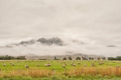 Campagna della Nuova Zelanda Fotografia Stock