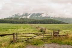 Campagna della Nuova Zelanda Fotografie Stock Libere da Diritti