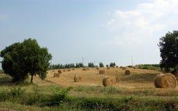 Campagna della Toscana Fotografia Stock Libera da Diritti
